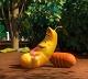 Phim hoạt hình Larva: Ấu trùng giữ thức ăn